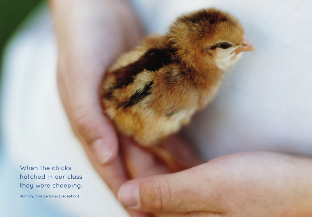photo of a chick being held which is a page from the Unicorn School prospectus