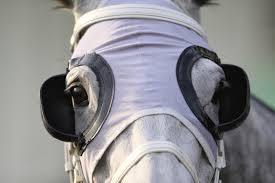 Horse wearing blinkers as a metaphor to say how freelance copywriters need to avoid distractions when working at home - unfortunately this is one of a few copywriting skills that may not come naturally